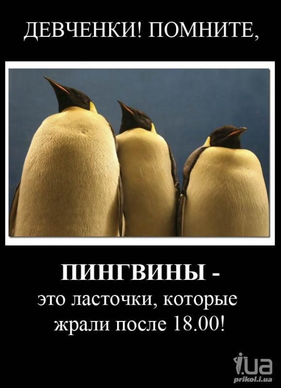 Пингвины прикольные картинки с надписями