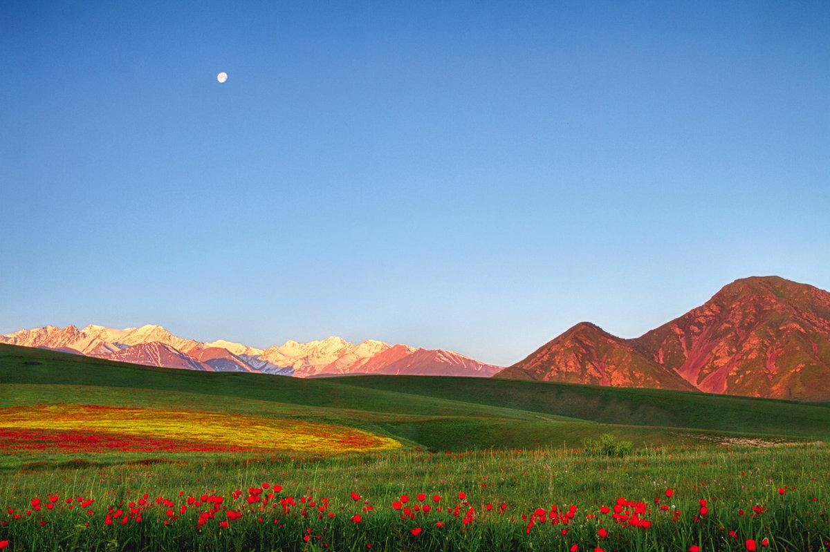 надо киргизские картинки продавцы-консультанты предложат