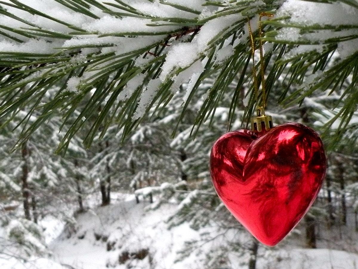 хабаровске промышляет зима в сердце фото хвост холодную воду