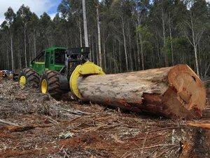 Заготовки леса со скиддером