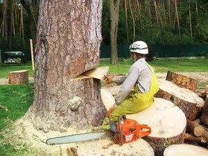 Технология валки деревьев