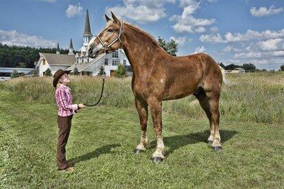 Большой Джейк — самая большая лошадь в мире.