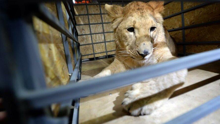 Список запрещенных к содержанию животных утвердили в правительстве