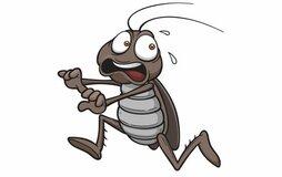 Чего больше всего боятся тараканы в квартире?