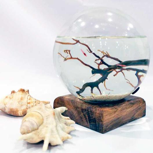 аквамир - миниаквариум