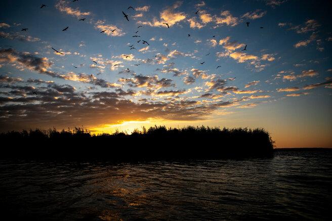 Возможно, это изображение (птица, природа, водоем и небо)