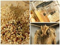 Что делать если в грецких орехах моль