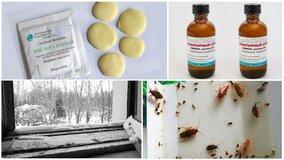 Способы избавиться от тараканов в квартире