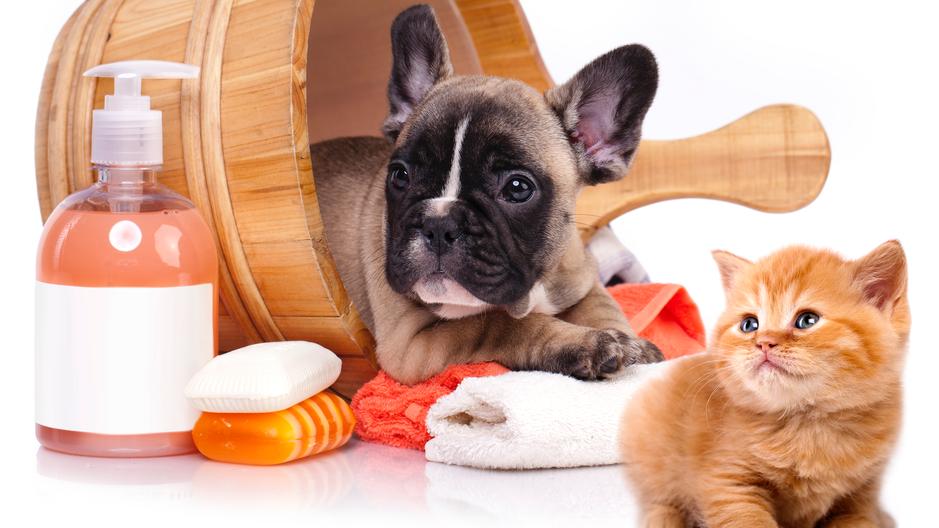 Стрижка кошек и собак на дому без наркоза от 1300 рублей!  Работаем с любыми породами. Найдем подход к агрессивным питомцам.