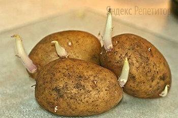 Как называется изображённый на фотографии орган покрытосеменного растения?