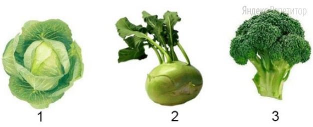 Видоизменения каких органов растения изображены на рисунках 1, 2 и 3?