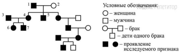 По изображённой на рисунке родословной определите и объясните характер наследования признака, выделенного чёрным цветом (доминантный или рецессивный, сцеплен или не сцеплен с полом).