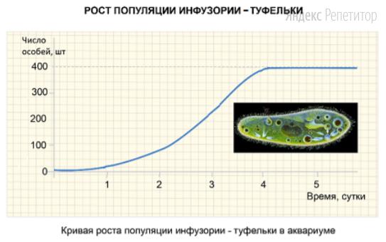 Проанализируйте график роста популяции инфузории-туфельки в аквариуме.