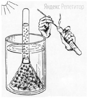На рисунке изображены результаты опыта, иллюстрирующего у растений