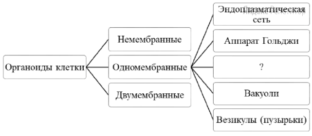 Рассмотрите предложенную схему классификации частей клетки.