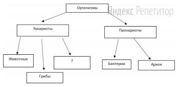 Рассмотрите предложенную схему классификации организмов.