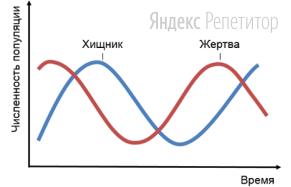 Проанализируйте график, отражающий модель отношений «хищник — жертва».