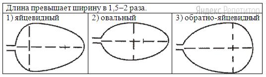 Г. Тип листа по соотношению длины, ширины и по расположению наиболее широкой части