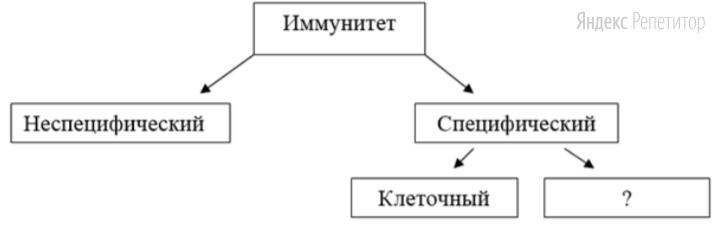 Рассмотрите предложенную схему классификации видов иммунитета.