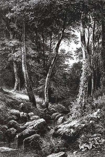 Какой уровень организации жизни отражён на гравюре И. Шишкина «Ручей в лесу»?