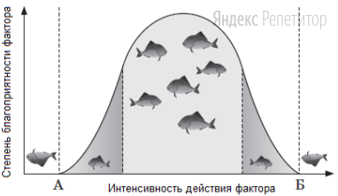 Представленный график описывает действие экологического фактора.