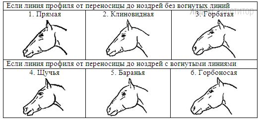 Б. Форма головы (по профилю)