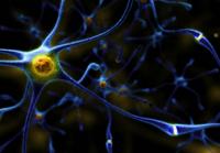 Укажите основные функции клеток, изображённых на рисунке.