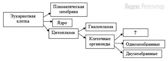 Рассмотрите предложенную схему строения эукариотной клетки.
