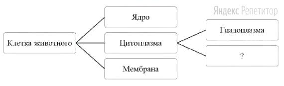 Рассмотрите предложенную схему классификации компонентов клетки.