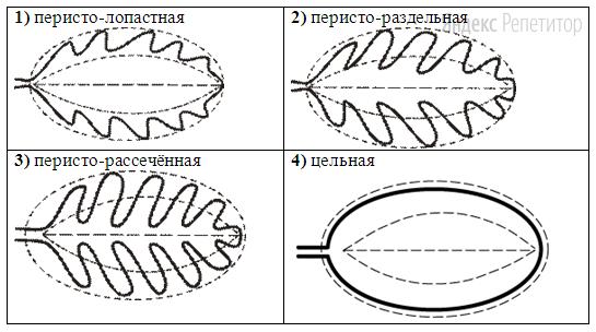 В. Форма листа