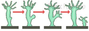 Все приведённые характеристики, кроме двух, используются для описания способа размножения, изображённого на рисунке.