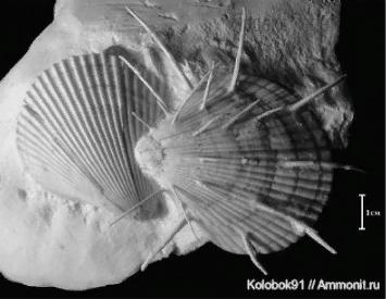 На фотографии представлена окаменелость вымершего животного, обитавшего около 90 млн лет назад.