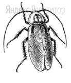 Животное, изображённое на рисунке, относится к классу Насекомые, так как