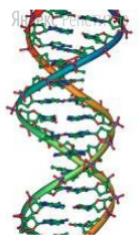 Все перечисленные ниже признаки, кроме двух, используются для описания изображённой на рисунке молекулы.