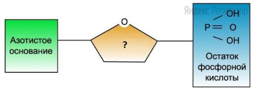 Рассмотрите предложенную схему строения мономера РНК.