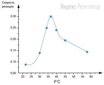 Проанализируйте график активности амилазы в зависимости от температуры. Скорость реакции по оси ... определяется количеством фермента, который катализирует превращение одного микромоля субстрата в минуту при стандартных условиях.