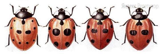 Какой критерий свидетельствует о принадлежности этих жуков к разным видам? Какой тип окраски выработался у этих жуков в процессе приспособленности к среде? С какой физиологической особенностью этих жуков связано развитие такой окраски?
