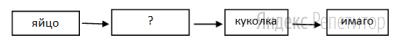 Рассмотрите схему, описывающую стадии развития берёзовой пяденицы.