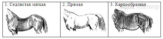 В. Форма спины