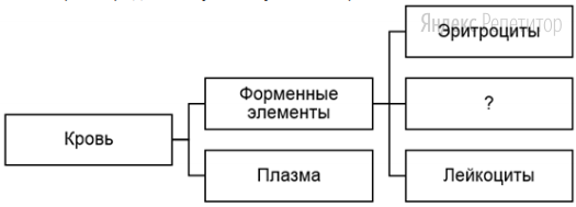 Рассмотрите предложенную схему состава крови.