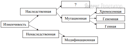 Рассмотрите предложенную схему классификации видов изменчивости.