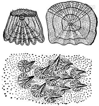 Тело представителей какой группы животных покрыто кожными образованиями, изображёнными на рисунке?