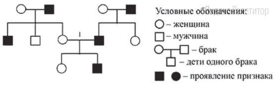 По изображённой на рисунке родословной определите вероятность (в процентах) рождения в браке 1 ребёнка с признаком, обозначенным чёрным цветом, если признак сцеплен с полом.