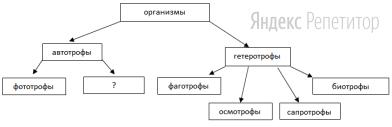 Рассмотрите предложенную схему деления организмов по типам питания.