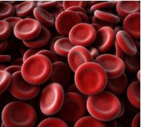Клетки крови человека, изображённые на рисунке: