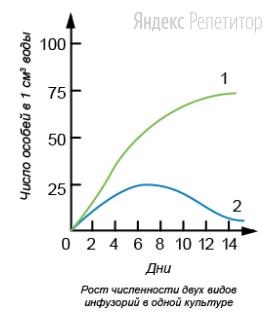 Проанализируйте график, отражающий рост двух видов инфузорий в одной культуре.
