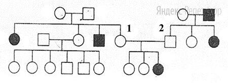По изображённой на рисунке родословной определите вероятность в процентах рождения ребёнка с признаком, обозначенным чёрным цветом у родителей, обозначенных цифрами ... и ....