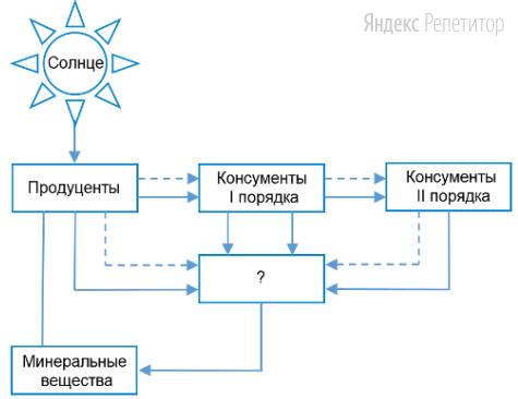 Рассмотрите предложенную схему переноса вещества и энергии по цепи питания (сплошными стрелками обозначен перенос вещества, пунктирными — энергии).