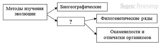 Рассмотрите предложенную схему классификации методов изучения эволюции.