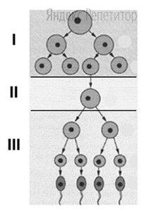Рассмотрите схему и назовите процесс, показанный на рисунке. Укажите название зоны, обозначенной цифрой .... Какой процесс происходит в этой зоне?